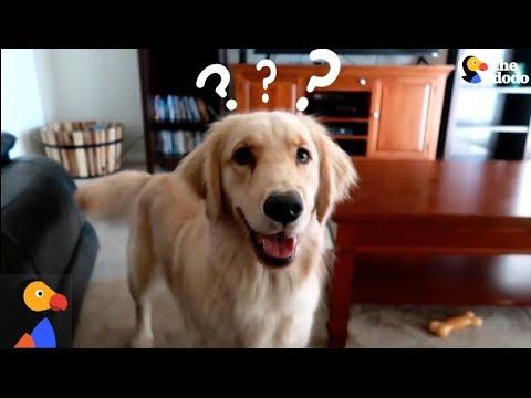 Xxx Mp4 SMART Service Dog Makes HILARIOUS Mistake The Dodo 3gp Sex