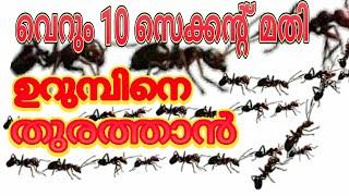 How To Get Rid Of Ants (ഉറുമ്പിനെ തുരത്താൻ പൊടിക്കൈ