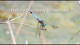 Episode 15 - Nature Discovery Screencast - A Walk Around the Pond