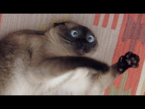 Cats just never fail to make us laugh Funny cat compilation