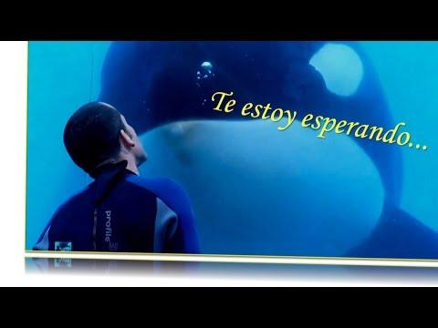 Muere Tilikum la orca asesina de SeaWorld