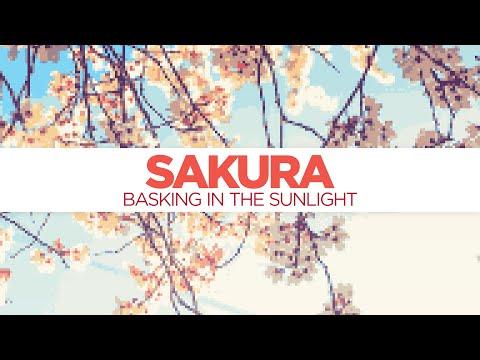 Sakura from Basking in the Sunlight