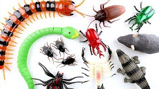Super Creepy Toys Collection R/C Snake Centipede Spider Beetle Stag beetle!  All type of Insect Toys