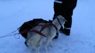 Hundespann Departure