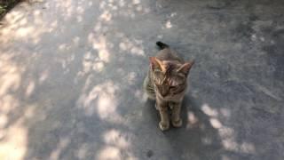 নারিকেল খেকো বিড়াল : My Talking Cat