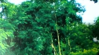 Mon dilam pran dilam .Runa Laila & Kumar Biswajit .মন দিলাম প্রাণ দিলাম।