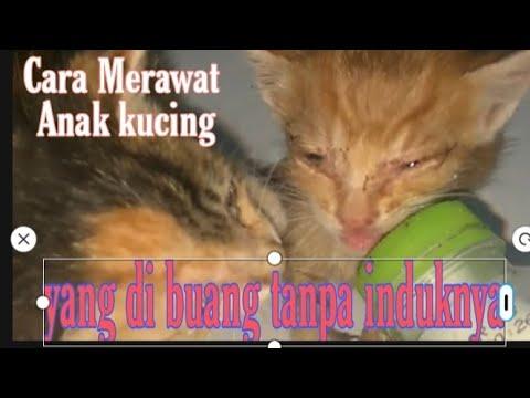 Cara Merawat Anak kucing yang dibuang tanpa Induknya
