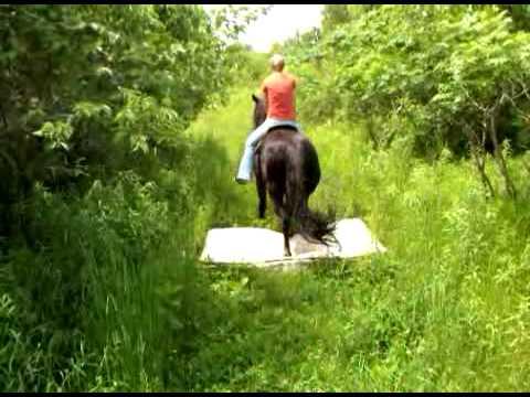 Xxx Mp4 Bernies Training Horse Mattress 3GP 3gp Sex
