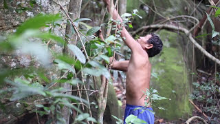 Primitive Technology, Making Stone Axe in the wild