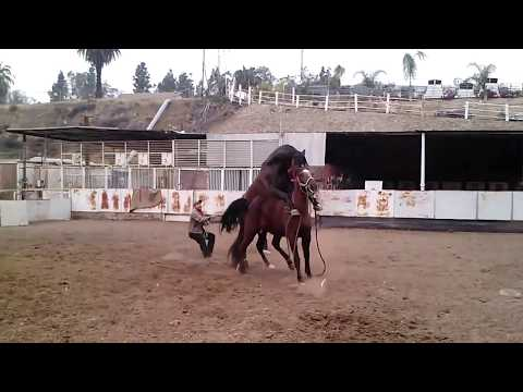 Xxx Mp4 Quarter Horse X Andaluz 3gp Sex
