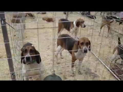 I Feria de Perros de Caza Terra de Melide
