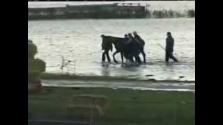 Rescue of 200 horses by 7 women in 2006 ( Netherland )