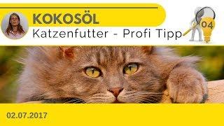 🔪#04 - Kokosöl für Katzen ✔ Ein Wundermittel gegen Krankheiten?