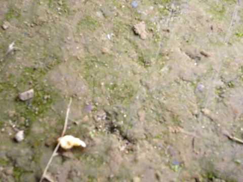 螞蟻搬食品