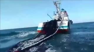 طريقة صيد سمك السردين HD 2016 ardines