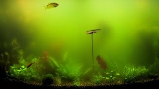 10 Types of Algae Commonly Found In Planted Aquariums and How to Control It