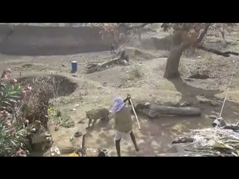 Xxx Mp4 39 Indian Bear Grylls 39 Battles Leopard With Stick Saved By Sniper Stone Throw 3gp Sex