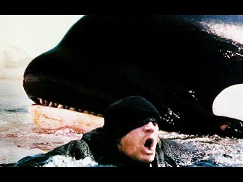 Ataques de Orcas a humanos