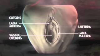 Female genital mutilation (against)