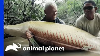 Monster Arapaima is Your 'Mermaid' of Lore | River Monsters