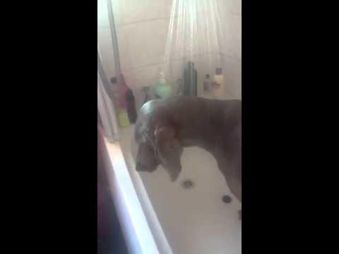 Xxx Mp4 Levi Getting A Bath Xxx 3gp Sex