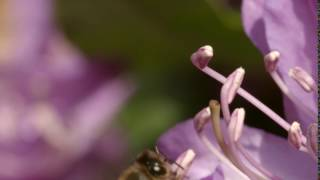 Gardenstock 03 Videvo