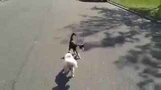 قطة تساعد كلب اعمي علي عبور الطريق !! 👇