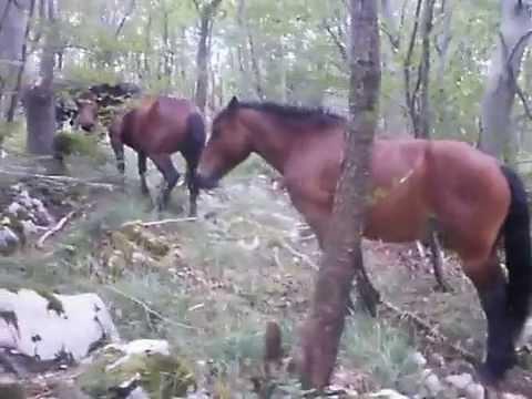 Konji u planini i drugo 6. rujna 2014.