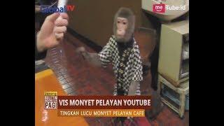 Lucu!! Sebuah Cafe di Jepang Pekerjakan Hewan Monyet Sebagai Pelayan - BIP 23/08