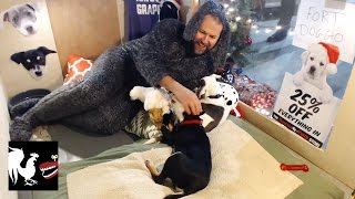 Holiday Puppies - RT Life