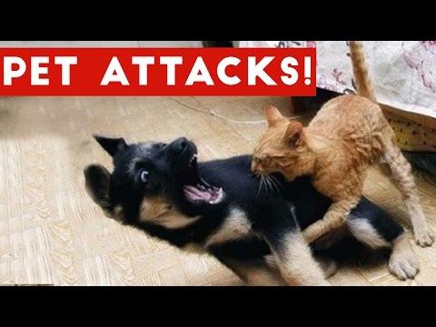 Funniest Animal Attacks Compilation October 2016 Funny Pet Videos