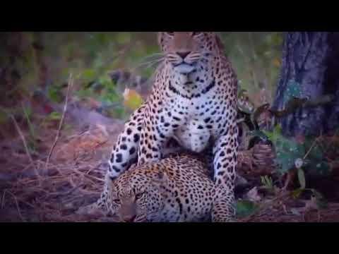 Xxx Mp4 Tiger And Lion Sex 3gp Sex