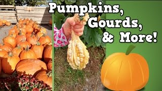 Pumpkins, Gourds, & More!  (Harry Kindergarten goes to the pumpkin patch!)