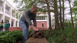 50-pound turtle takes a wrong turn, ends up in classroom
