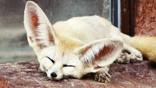 Top 10 CUTEST ANIMALS To Make Your PET
