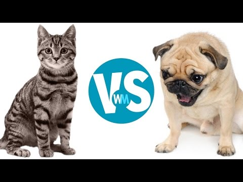 Cats Vs Dogs: Which Makes a