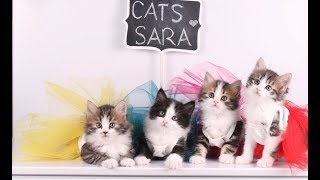 ولادة قطتي سيلا ومراحل عمر احفادي ❤️😻 my cat giving birth to 5 kittens