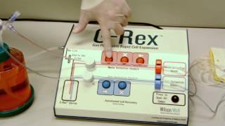 G-Rex100M Closed System harvest w/ GatheRex