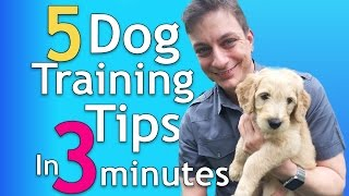 5 Dog Training Tips in 3 Minutes that will Change Everything!