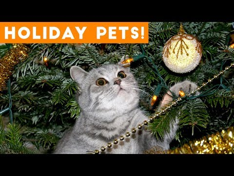 Xxx Mp4 Cutest Holiday Pets Compilation 2018 Funny Pet Videos 3gp Sex