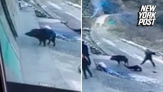 Ferocious wild boar attack kills an elderly man | New York Post