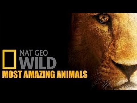 National Geographic Wild Documentary Most Amazing Animls- Part 2