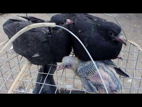 Bird's Market,  Riyadh Saudi Arabia is also known as Pet or Animal Market