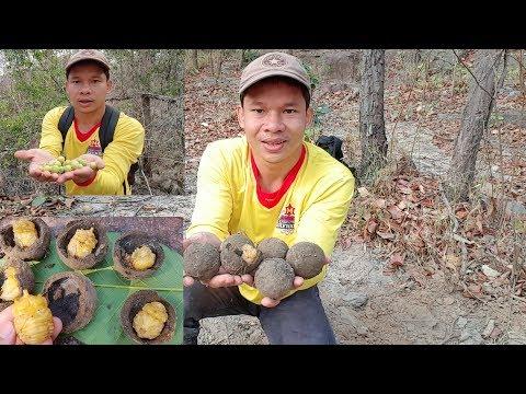 ขุดไข่เบ้าขี้ควาย แผน2กินส้มหมากเบ็นป่าสดๆ