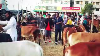 Waka waka [sakira] (bangla version)_hamba hamba