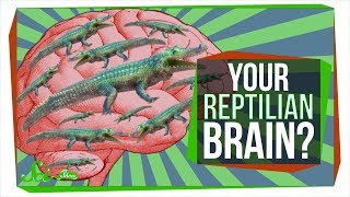 "No, You Don't Have a ""Reptilian Brain"""