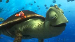Disney Pixar'dan Kayıp Balık Dori - Fragman #3 [Türkçe Dublajlı]