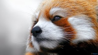 Aşırı Derecede Sevimli 6 Hayvan Cinsi