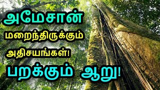 அமேசான் காடுகளில் மறைந்திருக்கும் அறிந்திராத அதிசயங்கள்! | Tamil new|unbelievable facts of amazon|