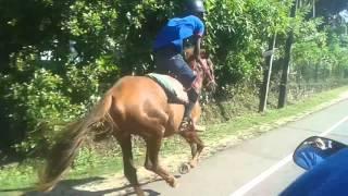 Sri Lanka horse